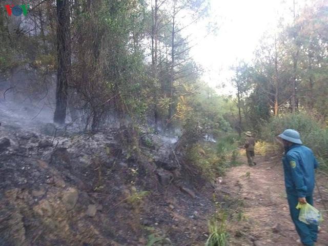 """Những cánh rừng thông """"chết đứng"""" sau những trận cháy kinh hoàng - Ảnh 5."""
