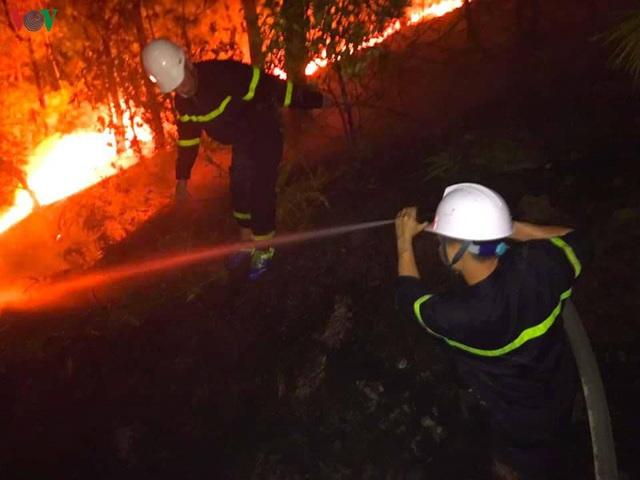 """Những cánh rừng thông """"chết đứng"""" sau những trận cháy kinh hoàng - Ảnh 6."""