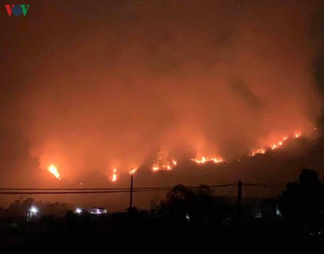 """Những cánh rừng thông """"chết đứng"""" sau những trận cháy kinh hoàng - Ảnh 7."""