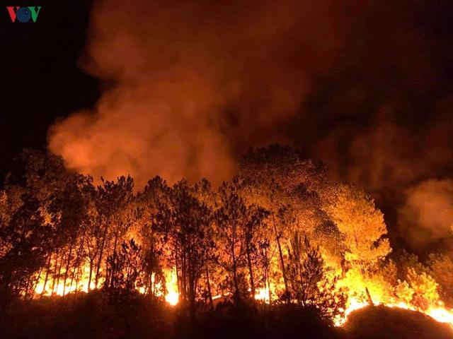 """Những cánh rừng thông """"chết đứng"""" sau những trận cháy kinh hoàng - Ảnh 8."""