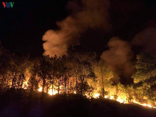 """Những cánh rừng thông """"chết đứng"""" sau những trận cháy kinh hoàng - Ảnh 9."""