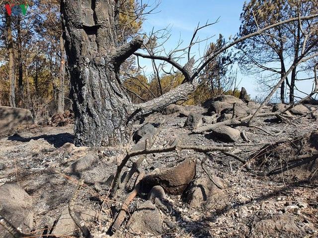 """Những cánh rừng thông """"chết đứng"""" sau những trận cháy kinh hoàng - Ảnh 10."""