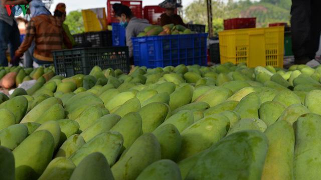 Sơn La xuất khẩu xoài ước đạt 2,24 triệu USD - Ảnh 1.