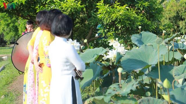 Đầm sen trắng hiếm có, giúp chủ đầm thu tiền triệu mỗi ngày ở Hà Nội - Ảnh 4.