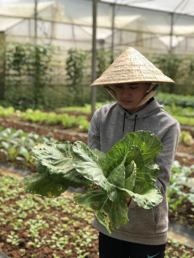Cử nhân Luật bỏ thành phố lên Đà Lạt trồng rau, bị cha mẹ phản đối nhưng 1 năm sau nhận lại thành quả bất ngờ - Ảnh 12.