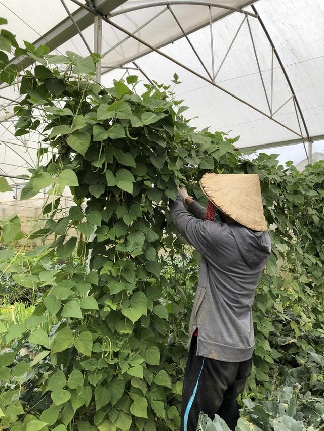 Cử nhân Luật bỏ thành phố lên Đà Lạt trồng rau, bị cha mẹ phản đối nhưng 1 năm sau nhận lại thành quả bất ngờ - Ảnh 7.