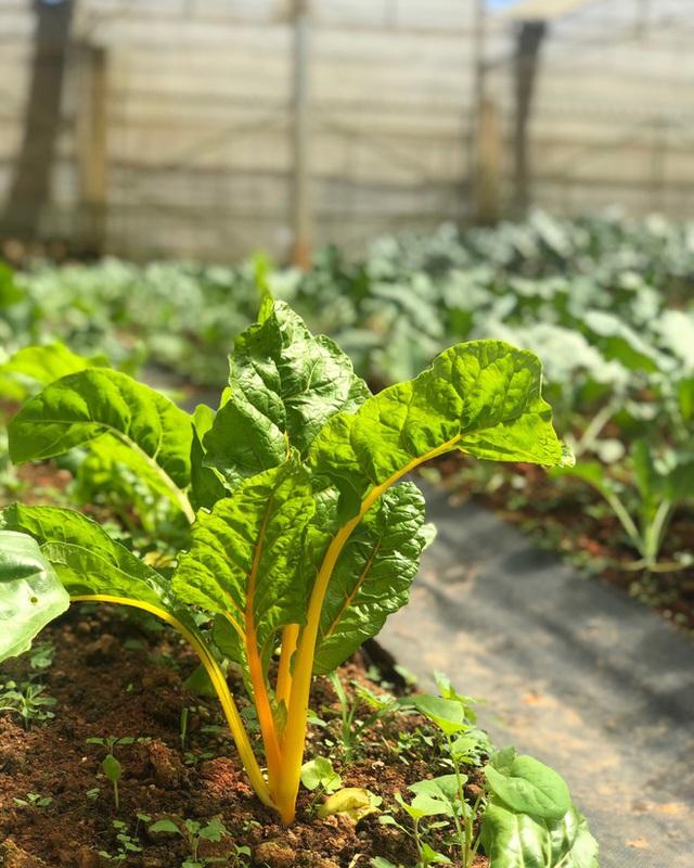 Cử nhân Luật bỏ thành phố lên Đà Lạt trồng rau, bị cha mẹ phản đối nhưng 1 năm sau nhận lại thành quả bất ngờ - Ảnh 8.