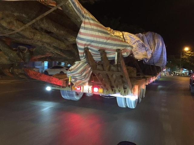 Xôn xao hình ảnh xe chở cây quái thú băng băng chạy trên đường ở Nghệ An - Ảnh 5.