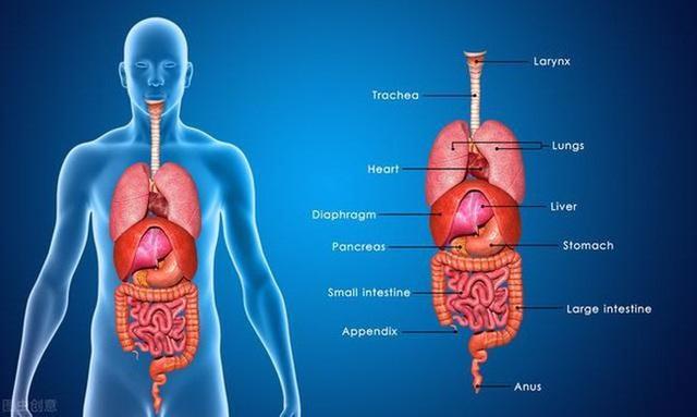 Bất thường xuất hiện trên cơ thể cho thấy các cơ quan nội tạng quá bẩn - Ảnh 1.