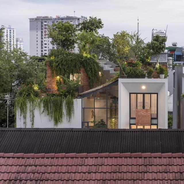 Nhờ có sân thượng trồng cây mà nhà phố xanh y như nhà vườn - Ảnh 1.