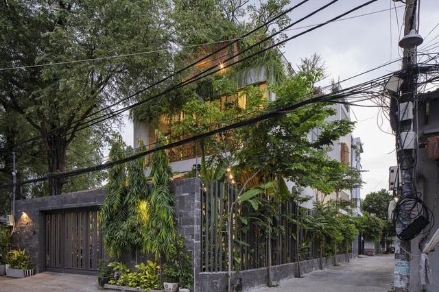 Nhờ có sân thượng trồng cây mà nhà phố xanh y như nhà vườn - Ảnh 2.