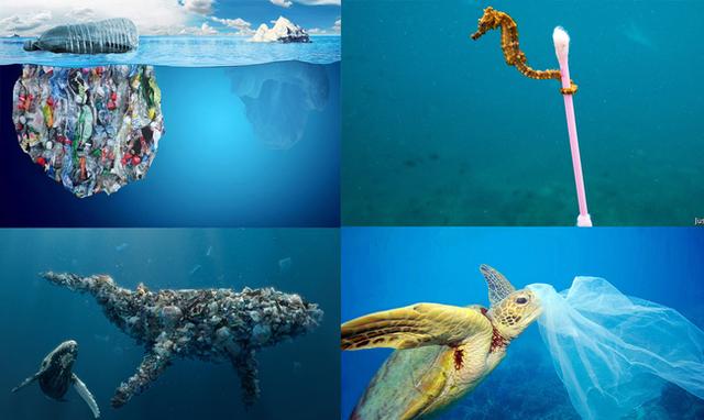 Chúng ta đang ăn đều đặn 2000 mảnh nhựa mỗi ngày, 30 năm nữa số nhựa trên biển sẽ nhiều hơn số cá đang bơi chỉ vì thói quen sống mà 100% người hiện đại đều có - Ảnh 3.