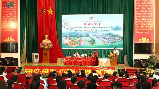 Gần 30 tấn nhãn huyện Sông Mã xuất khẩu chính ngạch sang Trung Quốc - Ảnh 1.