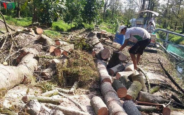 Cây sầu riêng chết hàng loạt, nhà vườn Tiền Giang ồ ạt phá bỏ vườn cây - Ảnh 3.