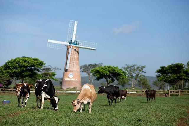 Đâu là yếu tố giúp Vinamilk giữ vững phong độ về xuất khẩu sữa trong bối cảnh Covid-19? - Ảnh 5.