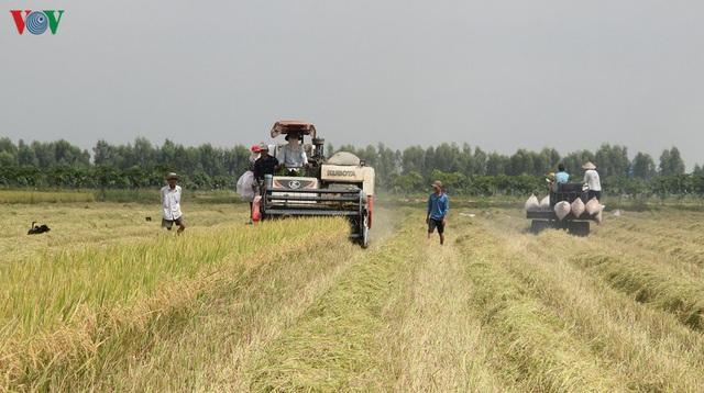 Vụ lúa Hè thu được mùa, được giá, nông dân Hậu Giang phấn khởi - Ảnh 1.