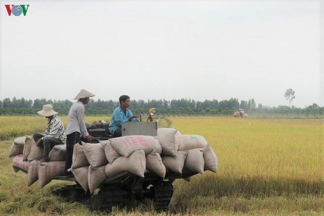 Vụ lúa Hè thu được mùa, được giá, nông dân Hậu Giang phấn khởi - Ảnh 2.