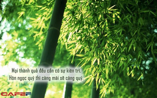 Định luật cây tre đơn giản mà 90% số đông không làm được: 10 năm giấu tài vì 1 phút phát huy - Ảnh 1.