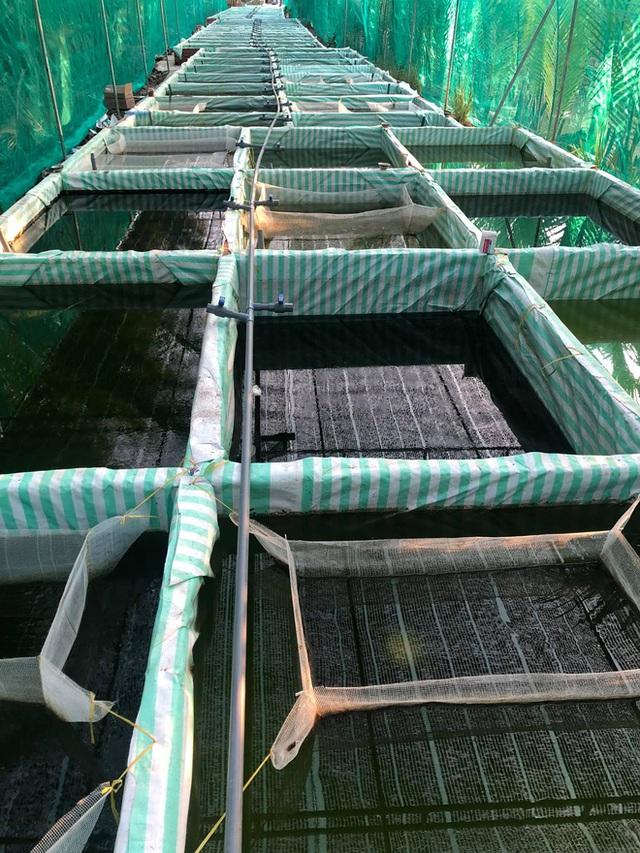 Nuôi hàng trăm bể cá, chàng trai Bến Tre trở thành triệu phú, kiếm 50 triệu đồng mỗi tháng - Ảnh 2.