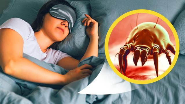 1 kg da chết, hàng trăm nghìn ve bụi: Hiểm họa không ngờ ẩn náu trên giường ngủ và cách tiêu diệt - Ảnh 2.