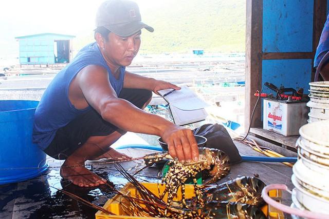Tôm hùm, ốc hương tăng giá, ngư dân miền Trung tranh thủ bán hải sản chạy... bão - Ảnh 1.