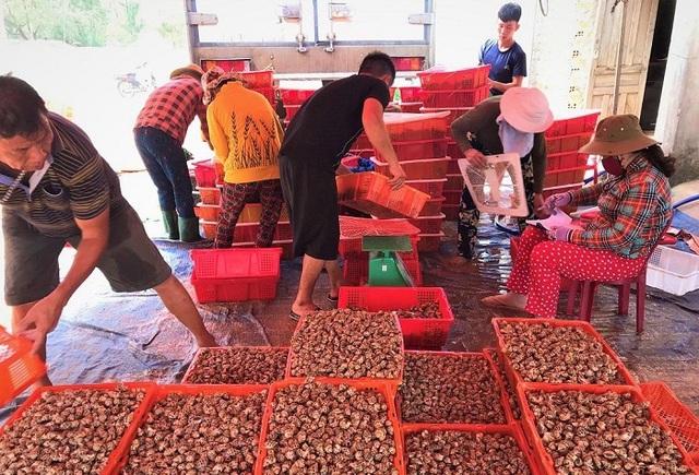 Tôm hùm, ốc hương tăng giá, ngư dân miền Trung tranh thủ bán hải sản chạy... bão - Ảnh 2.