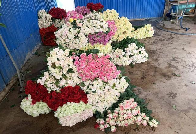 Hết thời phải đổ bỏ vì COVID-19, giá hoa hồng Đà Lạt tăng vọt - Ảnh 2.