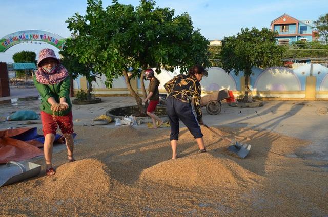 Lũ rút, dân Quảng Bình lao đao vì thóc lúa mọc mầm: Thóc này giờ chỉ phơi cho gà vịt ăn thôi - Ảnh 2.