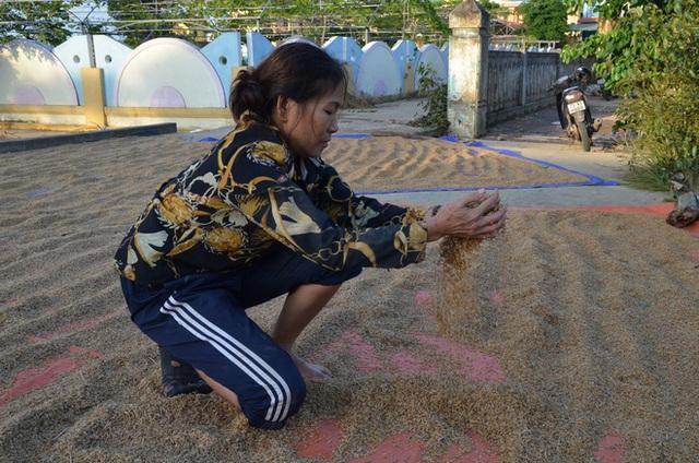 Lũ rút, dân Quảng Bình lao đao vì thóc lúa mọc mầm: Thóc này giờ chỉ phơi cho gà vịt ăn thôi - Ảnh 4.
