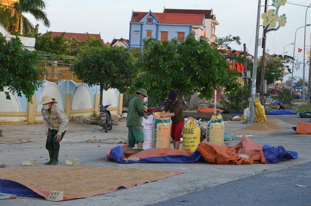 Lũ rút, dân Quảng Bình lao đao vì thóc lúa mọc mầm: Thóc này giờ chỉ phơi cho gà vịt ăn thôi - Ảnh 6.