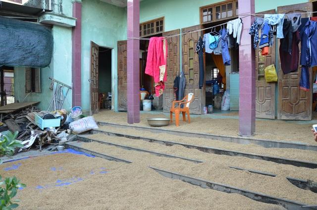 Lũ rút, dân Quảng Bình lao đao vì thóc lúa mọc mầm: Thóc này giờ chỉ phơi cho gà vịt ăn thôi - Ảnh 8.