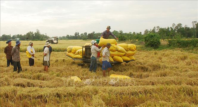 Thị trường nông sản tuần qua: Giá tiêu đồng loạt tăng - Ảnh 1.