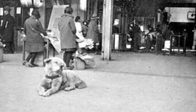 Những bức ảnh hiếm hoi về Hachikō - biểu tượng trung thành của người Nhật khiến người xem cảm tưởng câu chuyện đau lòng ấy đang diễn ra trước mắt - Ảnh 6.