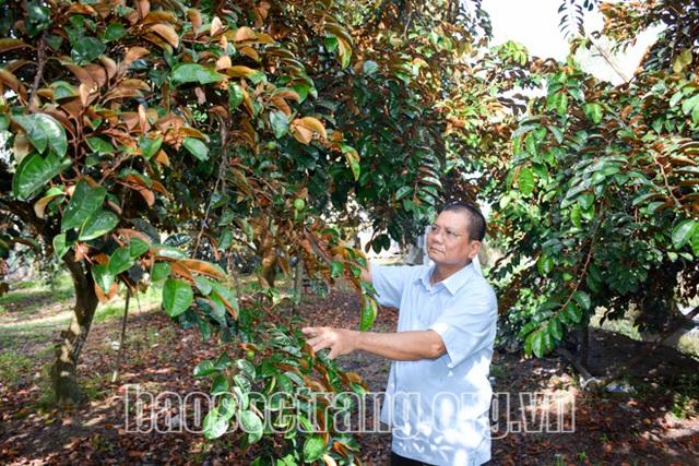 Sóc Trăng: Nông dân giàu có nhờ trồng cây đặc sản, trái cây mọng ngọt ngon còn bán được sang Mỹ - Ảnh 1.