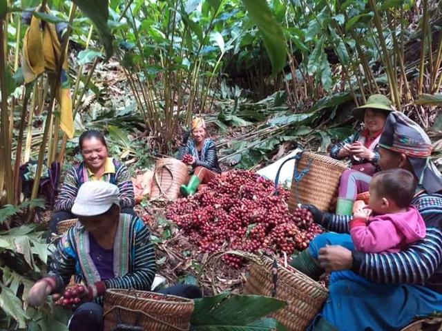 Thu hàng trăm triệu đồng mỗi năm từ trồng cây dược liệu - Ảnh 3.
