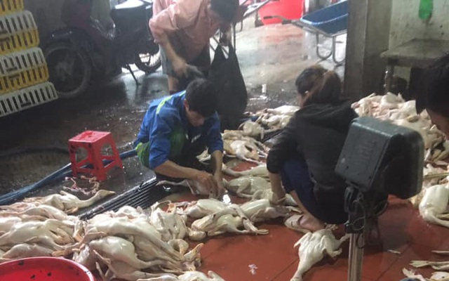 Giá gia cầm hôm nay 30/10: Gà thịt công nghiệp rớt liền mấy giá, người nuôi vịt thịt khóc ròng vì ế ẩm - Ảnh 1.