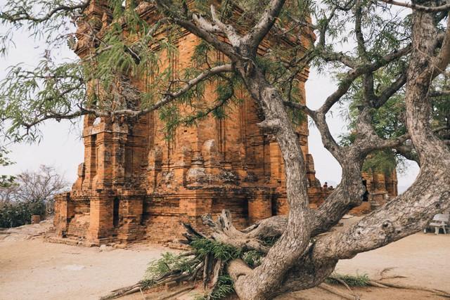 Enjoy 15 địa điểm cực hot tại Ninh Thuận và Bình Thuận chỉ trong 4N3Đ: Cung đường dành cho những tâm hồn ưa trải nghiệm - Ảnh 4.