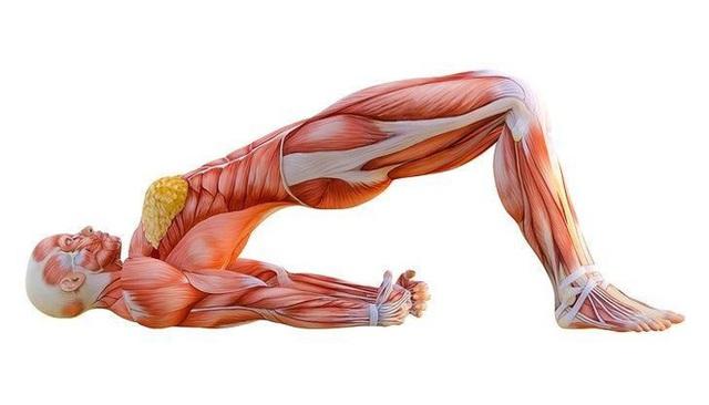 Tư thế Cây cầu: Thuốc giảm đau tự nhiên sau 7 ngày cho ai đau lưng, cột sống, tiêu hóa - Ảnh 1.