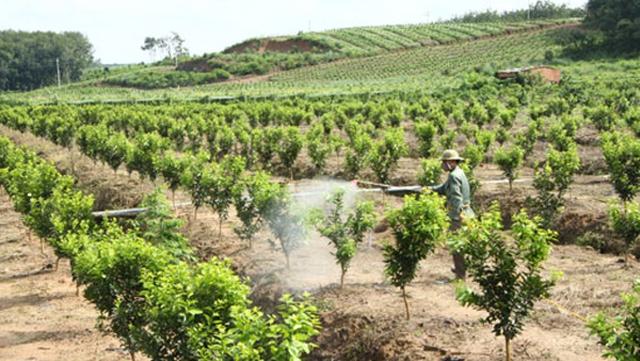 Nhiều chính sách ưu đãi đón làn sóng đầu tư vào nông nghiệp  - Ảnh 3.