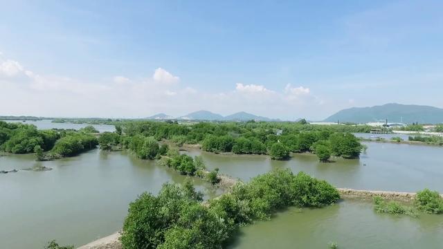 """Mạng xã hội bỗng chốc """"xanh rì"""" với chiến dịch """"Triệu cây vươn cao cho Việt Nam xanh"""" - Ảnh 3."""