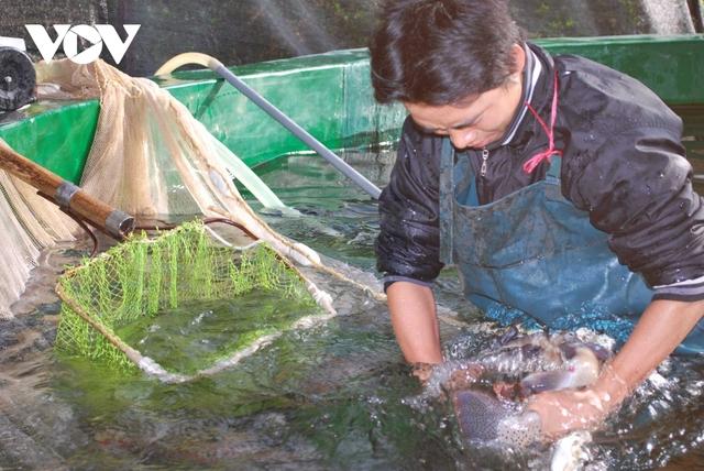 Cá hồi, cá tầm Việt Nam tìm hướng đi trong cuộc cạnh tranh mới  - Ảnh 1.