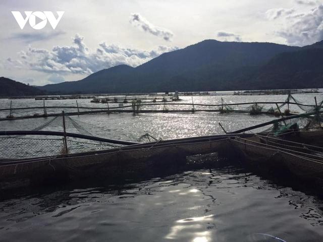 Cá hồi, cá tầm Việt Nam tìm hướng đi trong cuộc cạnh tranh mới  - Ảnh 3.