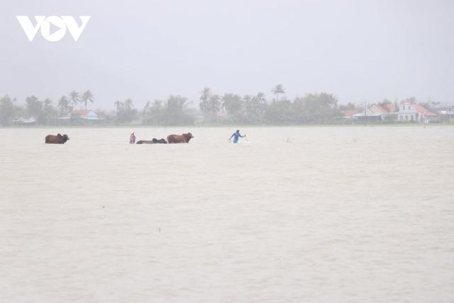 Bình Định: Nước lũ đổ về gây ngập cửa ngõ vào thành phố Quy Nhơn  - Ảnh 9.