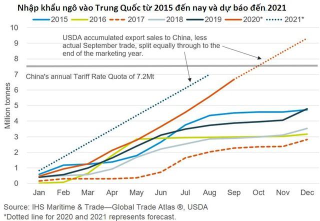 Những lý do khiến giá ngô và đậu tương thế giới tăng 25-30% trong 3 tháng qua - Ảnh 2.