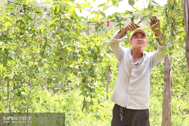 Sơn La: Trồng chanh leo, nhìn đâu cũng thấy trái, ông nông dân người Mông thu hàng trăm triệu - Ảnh 3.