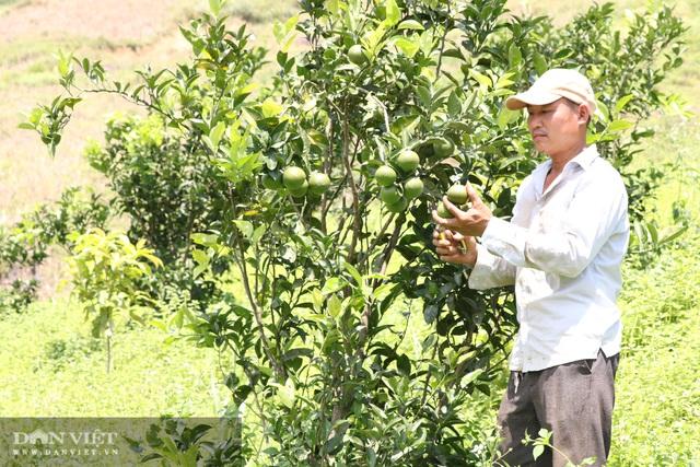 Sơn La: Trồng chanh leo, nhìn đâu cũng thấy trái, ông nông dân người Mông thu hàng trăm triệu - Ảnh 4.