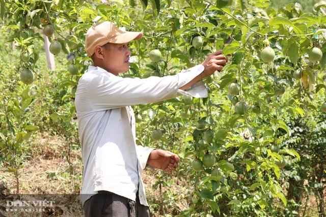 Sơn La: Trồng chanh leo, nhìn đâu cũng thấy trái, ông nông dân người Mông thu hàng trăm triệu - Ảnh 5.