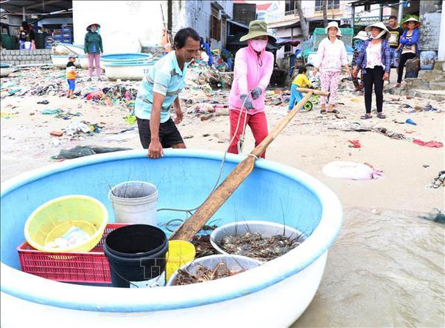 Phú Yên: Sau bão số 12, tôm hùm chết hàng loạt khiến người dân điêu đứng  - Ảnh 1.