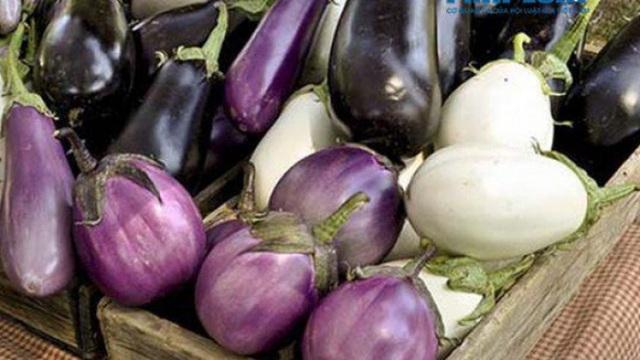 BS dinh dưỡng: Người bị tiểu đường, mỡ máu cao nên chọn cà tím làm bảo bối trên bàn ăn - Ảnh 2.