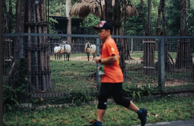 WOW Marathon Vinpearl Phú Quốc và trải nghiệm hoàn toàn khác biệt: Vừa rèn luyện sức khỏe, vừa thưởng thức trọn vẹn vẻ đẹp của đảo ngọc - Ảnh 6.
